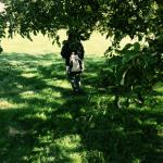 Under äppelträdet