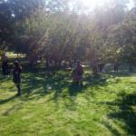 Under äppelträden