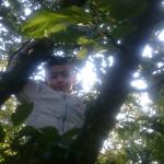 Sitta i äppelträd
