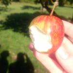 Smaka äpplen